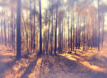Fuzzy autumn forest landscape Royalty Free Stock Image