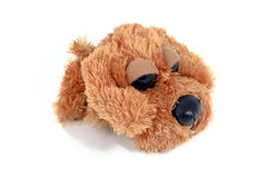 Fuzzy brown puppy toy Royalty Free Stock Images