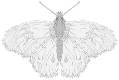 Fuzzy Butterfly. Line drawing, vector illustration over white, horizontal, isolated Royalty Free Stock Photo