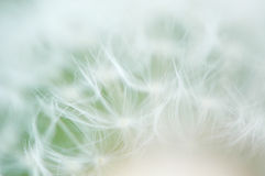 Fuzzy dandelion Royalty Free Stock Photos