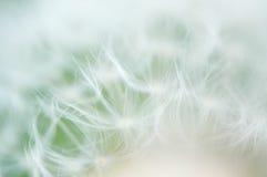 Fuzzy dandelion. Fuzzy blurry dandelion seed close-up background Royalty Free Stock Photos