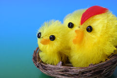 Fuzzy Easter Chicks in Nest Royalty Free Stock Photos