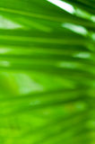 Fuzzy foliage. Virtual strips of green foliage Stock Photo