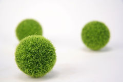 Fuzzy Green Balls. Three small fuzzy green balls on a white background Royalty Free Stock Images
