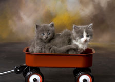 Fuzzy Kittens in a Wagon Royalty Free Stock Image