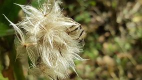 Fuzzy life. Fuzzy in nature royalty free stock photography