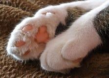 Fuzzy paws Stock Photos