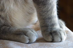 Fuzzy paws of a ktten.. A pettable texture. Grey tabby cat. Stock Images
