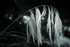 Fuzzy and Peaceful Reed Mood Stock Images