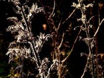 Fuzzy Plant Silhouette imagem de stock royalty free
