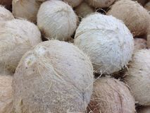 Fuzzy and round. Photo of the bark of some fuzzy white coconuts Royalty Free Stock Images