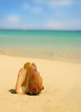 fuzzy seashell tła Obraz Stock
