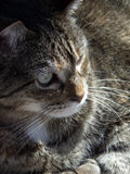 Fuzzy and Sunny. Tiger striped feline enjoying the warmth and sun stock photo