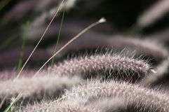 Fuzzy Tendrils Stock Images