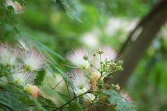 Fuzzy Tree Branch Flowers Royaltyfri Foto