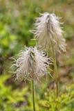 Fuzzy Wild Flowers Stock Photo