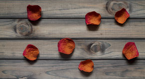 A fwe petals of rose Royalty Free Stock Images