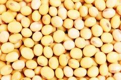 fyller makroen sköt soybeans Royaltyfria Foton