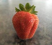 Fyllig röd jordgubbe Royaltyfri Foto