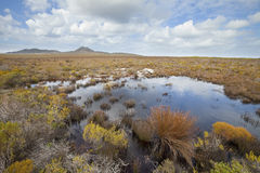 Fynbos植被 库存照片