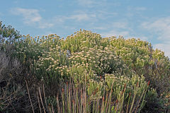 Fynbos节日-一朵野花的庆祝独特对海角 免版税库存照片