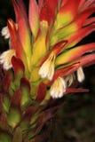 Fynbos Fotografía de archivo libre de regalías
