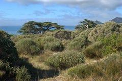 Fynbos bij het schiereiland van de Kaap Stock Foto