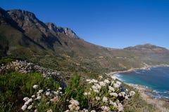 Fynbos coastline Royalty Free Stock Photo