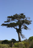 Fynbos con el árbol en Western Cape, Suráfrica Imagenes de archivo