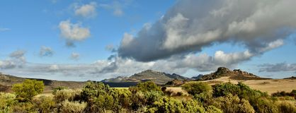 fynbos e montagne Fotografie Stock