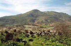 Fynbos flory, przylądek Dobry nadzieja rezerwat przyrody, południe - afrykanin Ponowny Fotografia Stock