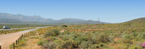 Fynbos and mountains panoramic Stock Image