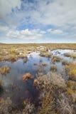 Fynbos-Vegetation Lizenzfreie Stockfotografie