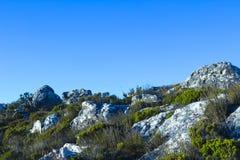 Fynbos vegetation at the top of Table Mountain 2 Stock Photos