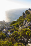 Fynbos vegetation at the top of Table Mountain 1 Royalty Free Stock Photos
