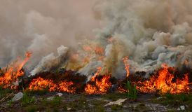Fynbos Wildfire. A wildfire rips through dry fynbos on the Cape Peninsula in South Africa royalty free stock photos