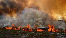 Fynbos Wildfire. A wildfire rips through dry fynbos on the Cape Peninsula in South Africa stock image