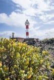 Fyr för El Toston i norden av ön av Fuerteventura Royaltyfria Bilder