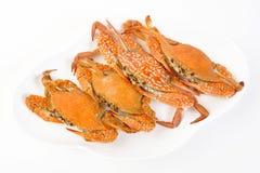 Fyra ångad krabba Royaltyfria Bilder