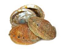 Fyra abaloneskal Arkivfoto