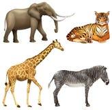 Fyra afrikanska djur Arkivfoto