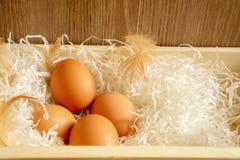 Fyra bruna hönas ägg och hönas fjäder på vitt strimlat papper i träkorg och brun bakgrund royaltyfri bild