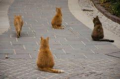 Fyra bruna katter som sitter i samma, placerar Royaltyfri Foto