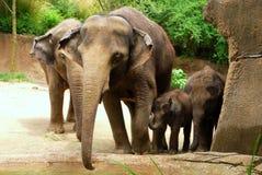 Fyra elefanter som poserar för en familjstående fotografering för bildbyråer