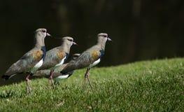 Fyra fåglar royaltyfria foton