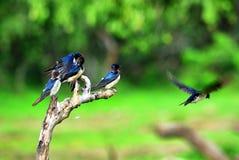Fyra fåglar på en sittpinne Royaltyfri Bild