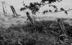 Fyra fenceposts Fotografering för Bildbyråer