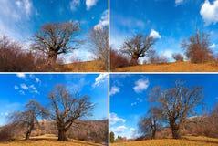Fyra foto av kastanjebruna träd i vinter Arkivfoto