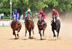 Fyra fullblods- kapplöpningshästar i rörelse Arkivfoton