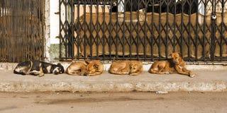 Fyra gatahundkapplöpning royaltyfri foto
